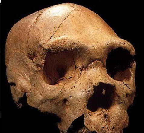Ceprano, la storia del ritrovamento dell'Homo Cepranensis