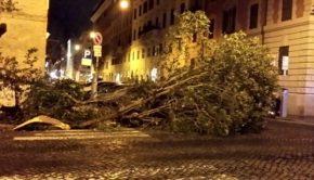 """Rosati (Lega): """"Municipio VIII inerme di fronte alla caduta degli alberi a Roma"""""""