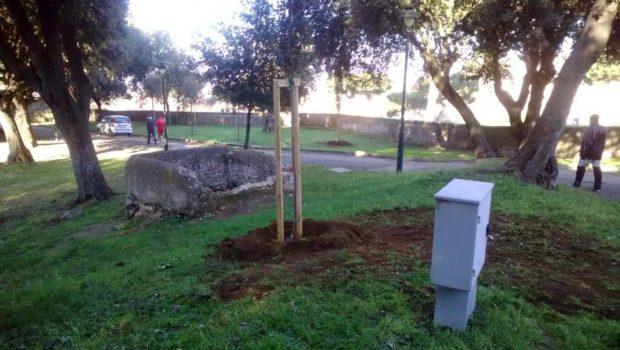 Frascati, nuovi alberi: si arricchisce il patrimonio arboreo della Città