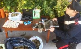 Cassia, carabinieri intervengono dopo l'allarme di furto ma scoprono una piantagione di marijuana