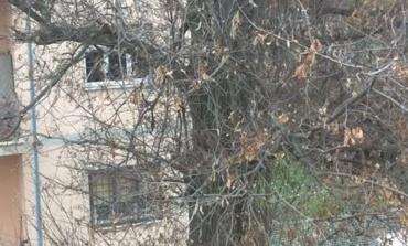 """Albano, albero """"pericoloso"""" in via Abetonia segnalato dai cittadini al PC"""