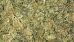 Cassino, scoperta una fabbrica di marijuana: arrestata giovane coppia