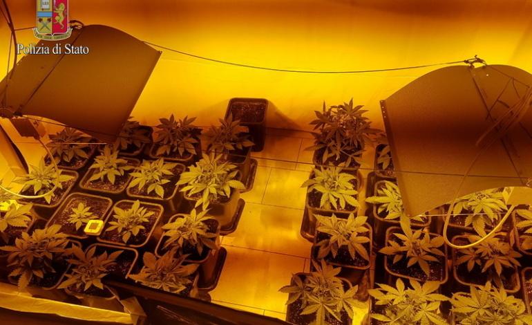 Ostia agenzia viaggi utilizzata come serra per coltivare for Interno 1 ostia