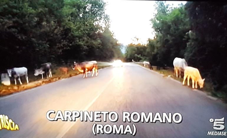 Carpineto Romano, questione bovini arriva anche a Striscia la notizia: Sindaci minacciati