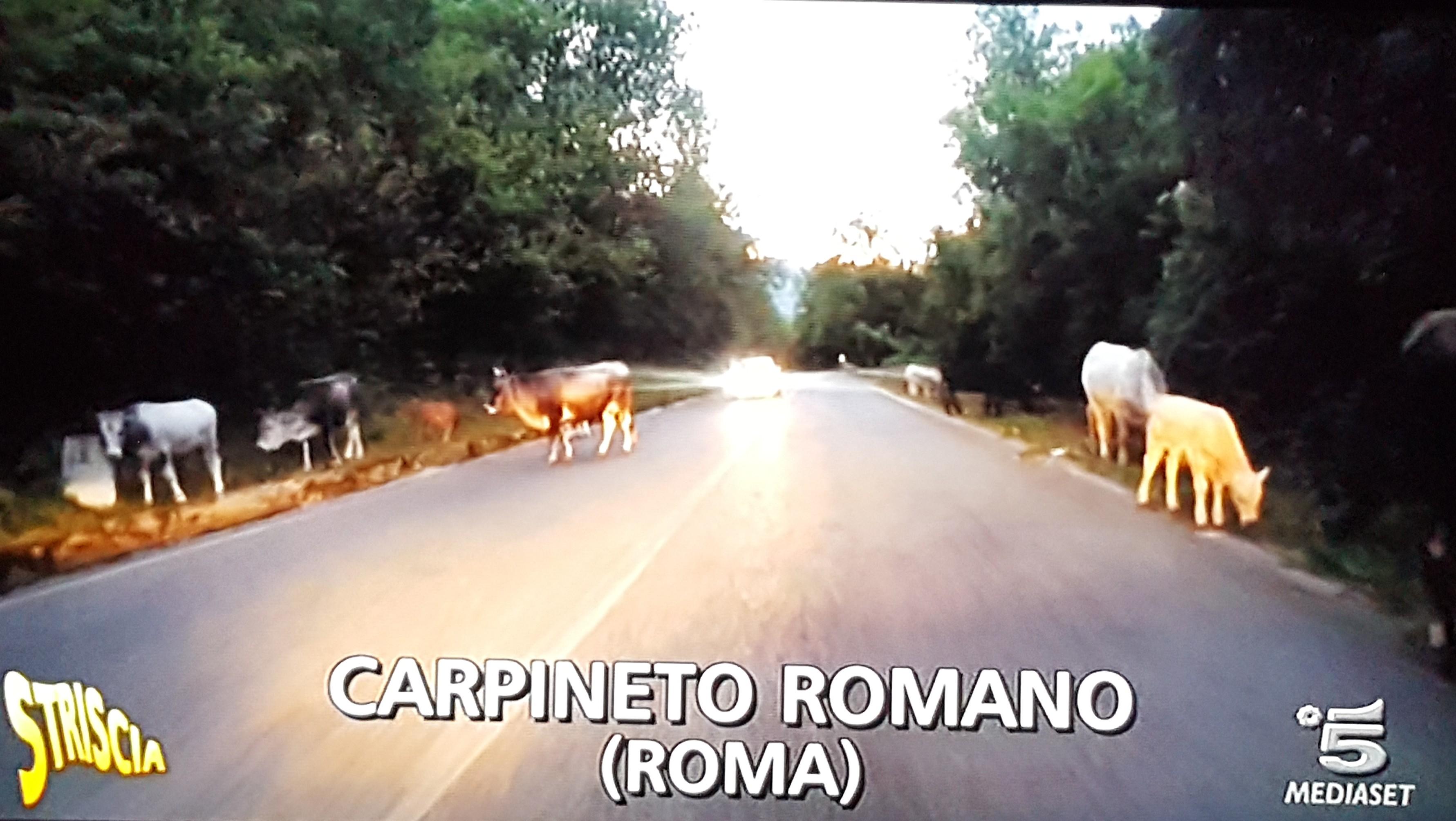 Carpineto Romano, questione bovini arriva anche a Striscia la notizia