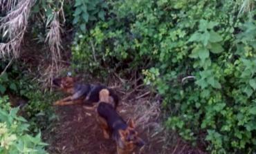 Cori, dieci cani salvati in tre diverse situazioni di pericolo