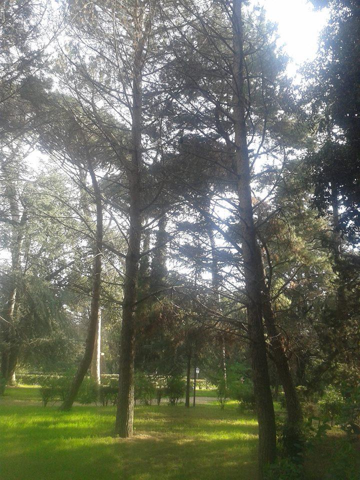 Roma, bonifica amianto a Villa Doria Pamphilj: rimossi 600 kg rifiuti speciali