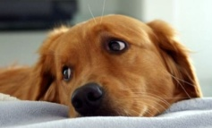 Ciampino, nasce lo sportello a tutela degli animali: novità apprezzata dai cittadini