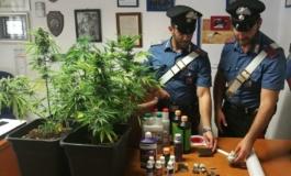 Ladispoli: i Carabinieri arrestano incensurato con hashish e piante di marijuana