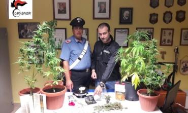 40enne sorano riforniva di marijuana i giovani di Cassino e della Val di Comino: arrestato