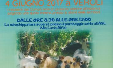 Veroli, 4 giugno: giornata gratuita del microchip per i cani