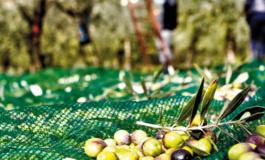 Carpineto, partito il corso per la formazione di coltivatori nel settore olivicolo