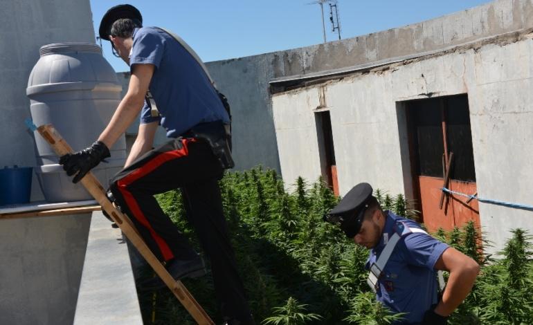 Roma, Casal Bruciato, Carabinieri scoprono giardino pensile con piantagione di marijuana