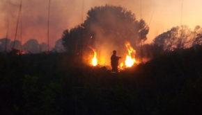 Riserva Naturale del Litorale Romano, siglato Protocollo d'Intesa per aumentare la sorveglianza e prevenire gli incendi