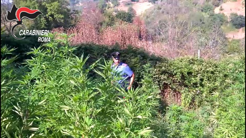 monterotondo marijuana civitella san paolo