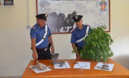 """San Cesareo, Carabinieri arrestano """"coltivatore diretto"""" di marijuana: anche proiettili nella sua abitazione"""