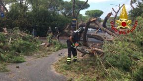 Roma e provincia, alberi caduti in strada feriscono le persone a causa del forte vento