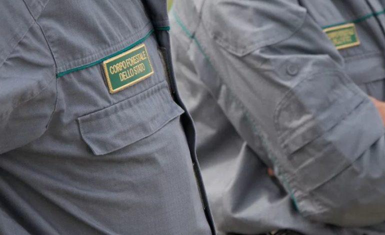 Pontecorvo, il Gruppo Carabinieri Forestale sequestra rifiuti di un impianto di compostaggio