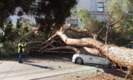 Prati, taxi distrutto da un albero crollato in Piazza Cinque Giornate: il conducente finisce in ospedale