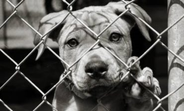 Ardea, maltrattava il proprio cane facendolo mangiare una volta al mese: arrestato residente fittizio
