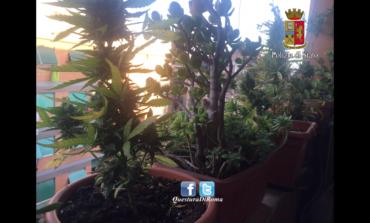 Piante di marijuana sul balcone a Portuense e ovuli di eroina in una casa di Tor Bella Monaca: tre arresti