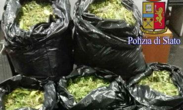 Borghesiana, trovati 120 kg di droga dentro sacchi della nettezza urbana