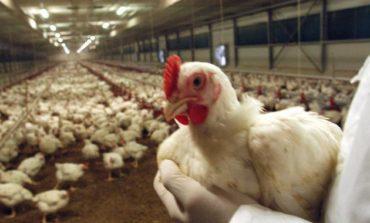 Tivoli, terminata la fase di allerta sull'influenzia aviaria: gli accertamenti effettuati non hanno evidenziato la circolazione del virus