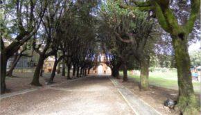 Anagni, per novembre previste nuove piantumazioni di alberi: il plauso del M5S