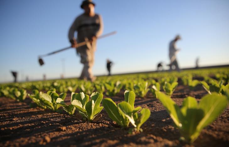 Jobincountry lavoro campagna agricoltura