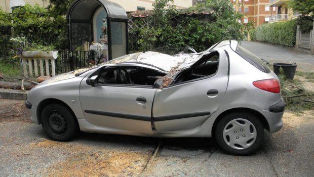 Villa Adriana, albero segnalato come pericolante caduto alle 5 di stamattina: tragedia sfiorata in via Lago di Garda