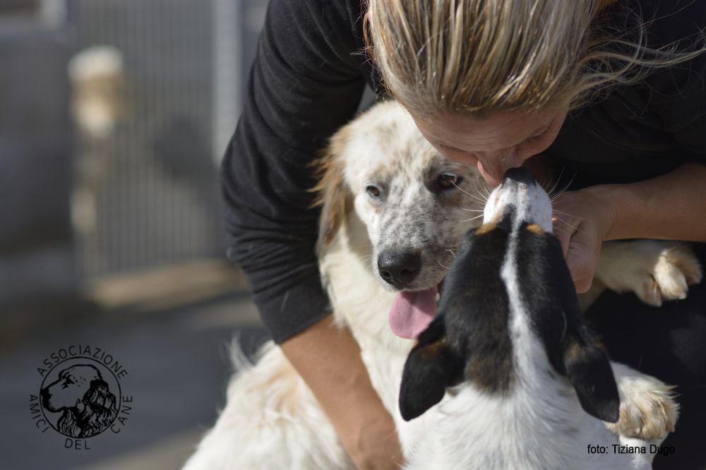 Valmontone, 30 giugno 2019, microchippatura e sterilizzazione cani