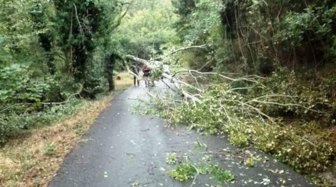 A seguito del forte vento dei giorni passati proseguono i lavori di pulizia della carreggiata nei comuni di Trevi Nel Lazio e Guarcino.