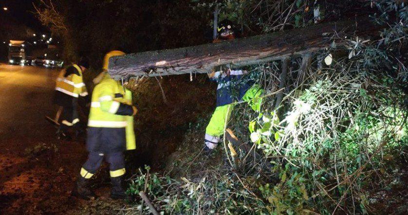 Maltempo vento albero caduto Velletri 11 marzo 2019 disagi provincia Roma