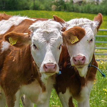 Il ministro rinnova il Comitato per la nutrizione e la sanità animale