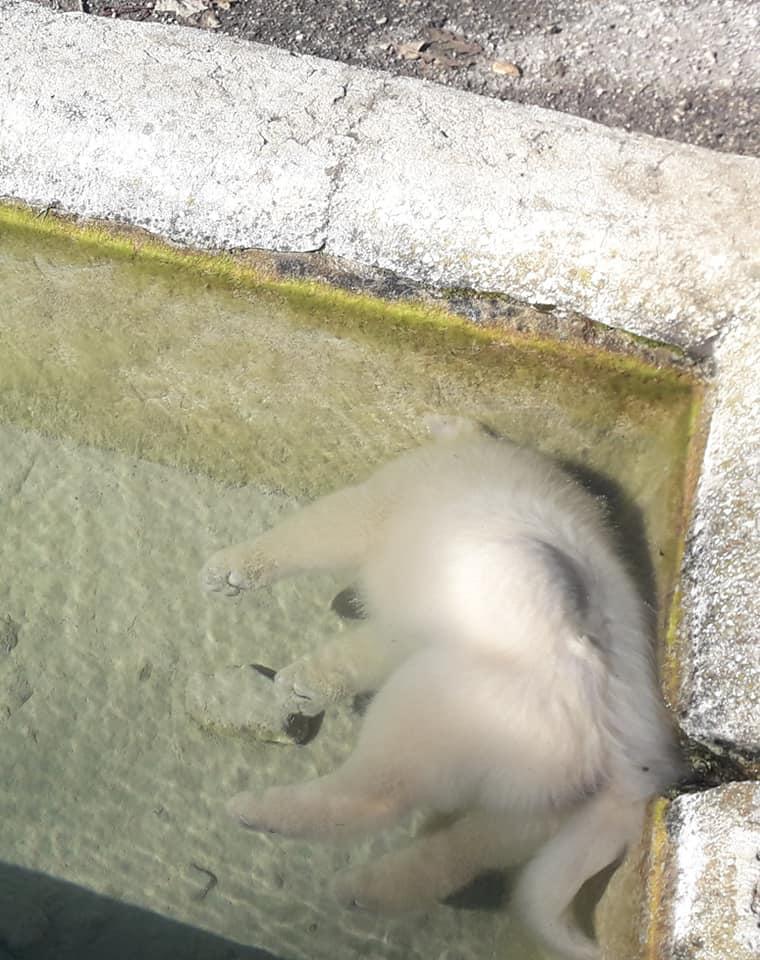 Piglio, due cuccioli di cane morti affogati nell'acqua gelida. Lo rende noto Rinaldo Sidoli, portavoce di Alleanza Popolare Ecologista