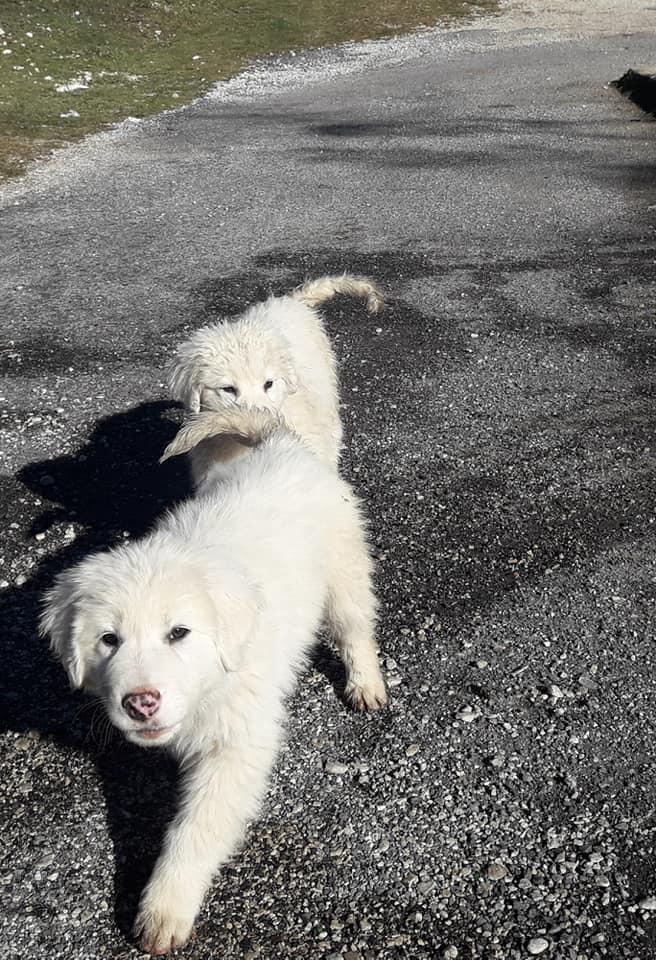 Piglio cuccioli cane affogati