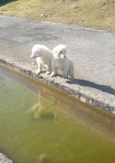 Piglio, i cuccioli di cane sono accidentalmente affogati e non sono stati uccisi