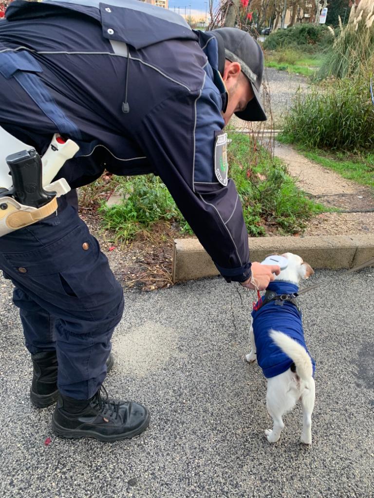 Pomezia microchip cani controlli polizia locale contrasto randagismo