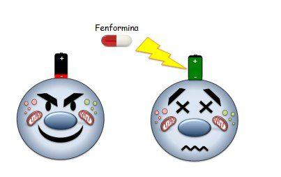 """Un farmaco """"carica-batterie"""" per spegnere i tumori: una cura migliore per il medulloblastoma è l'obiettivo di uno studio di un gruppo di ricercatori dell'Università """"La Sapienza"""" di Roma"""