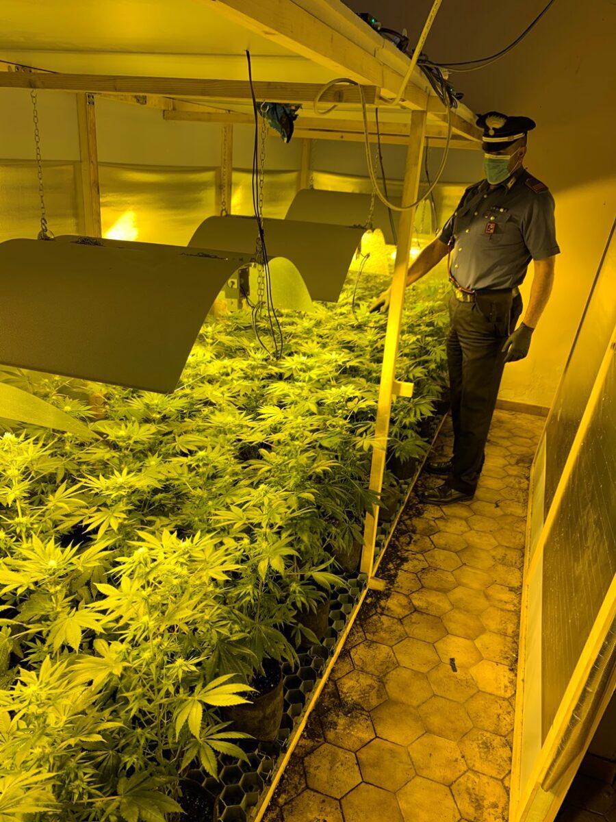 Civitella San Paolo, zio e nipote coltivavano marijuana: in manette