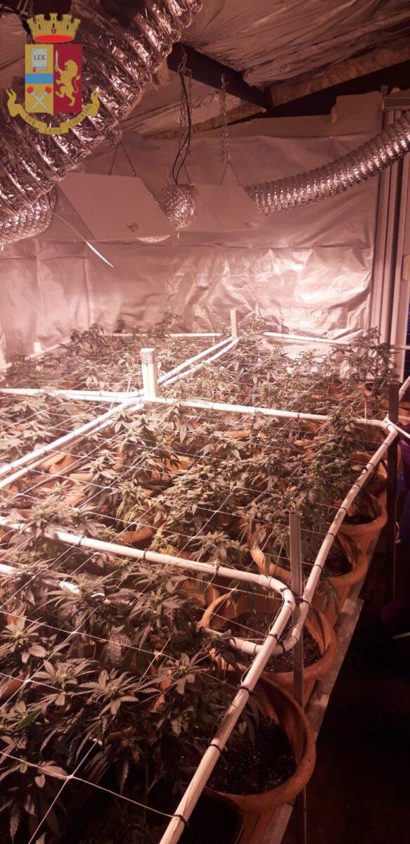 valmontone titolare negozio canapa light serra marijuana casa