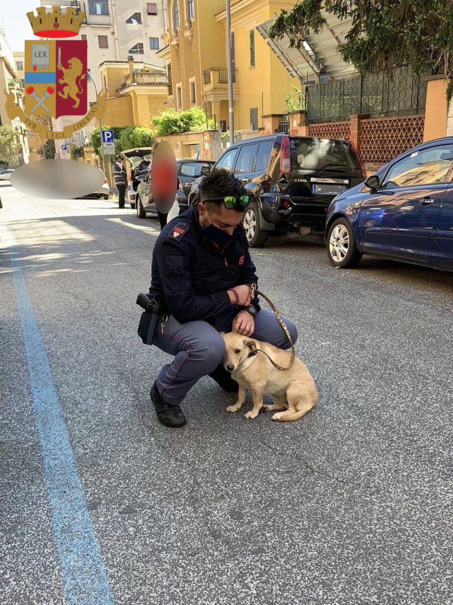 Roma, cagnolina abbandonata: ritrovata legata al palo della luce sotto il sole cocente