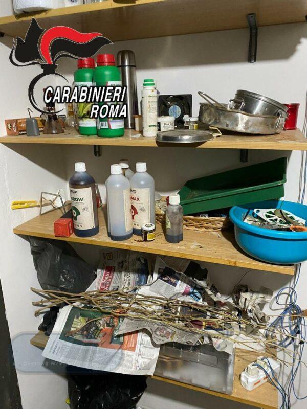 """Colleferro. Arrestati coniugi dal """"pollice verde"""": in casa avevano una serra artigianale per la coltivazione di marijuana (FOTO)"""
